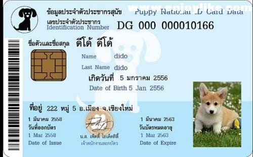 แอพทำบัตรหมาpet-indentity-card-for-android-feature.jpg